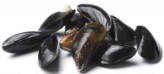 Mussels, cleaned, scrubbed with beards removed