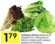 Iceberg Lettuce Product of Quebec No 1 - Romaine or Red or Green Leaf Lettuce