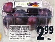 Angelino Black Plums