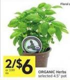 Organic Herbs Selected 4.5in Pot