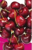 Jumbo Cherries Product of USA No 1 Grade 6.59/kg