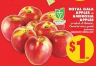 Royal Gala Apples or Ambrosia Apples
