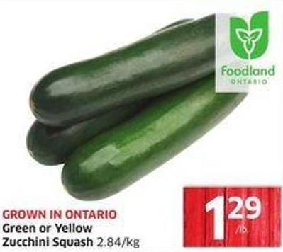 Green or Yellow Zucchini Squash 2.84/kg