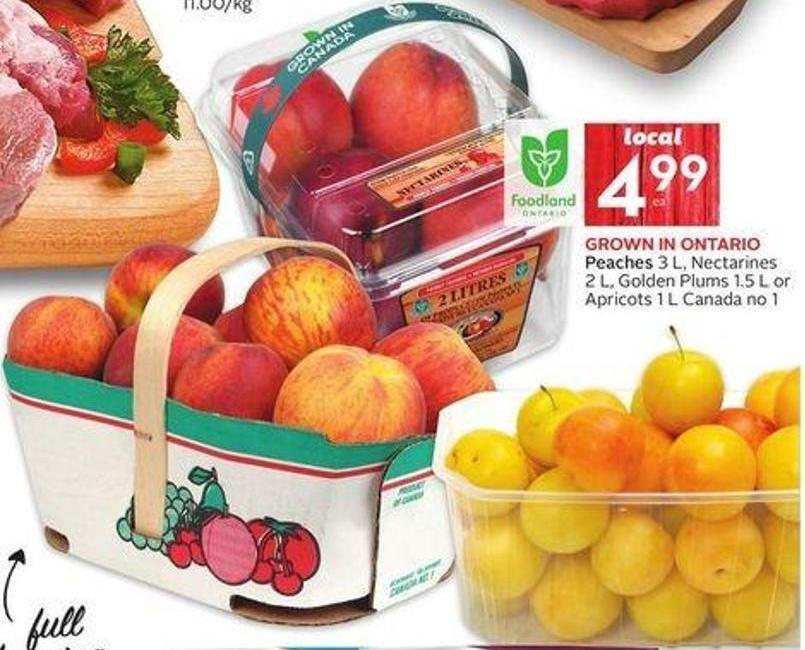 Peaches 3 L - Nectarines 2 L - Golden Plums 1.5 L or Apricots 1 L Canada No 1