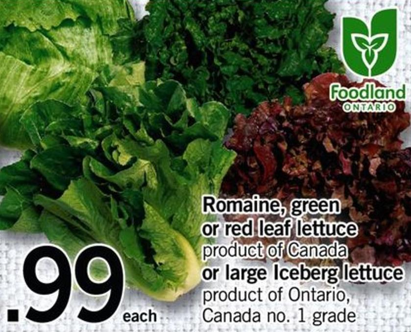 Romaine - Green Or Red Leaf Lettuce Or Large Iceberg Lettuce