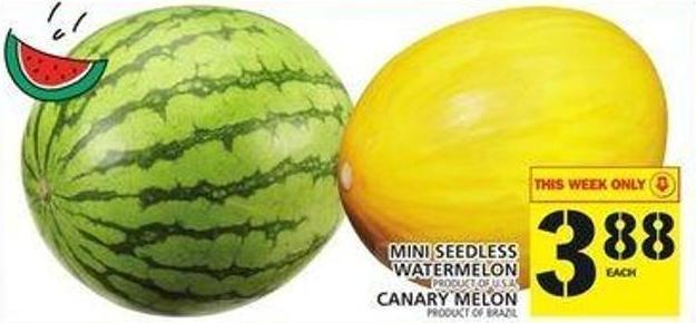 Mini Seedless Watermelon Or Canary Melon