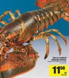 Live Or Cooked Atlantic Lobster - 1-1.25 Lb
