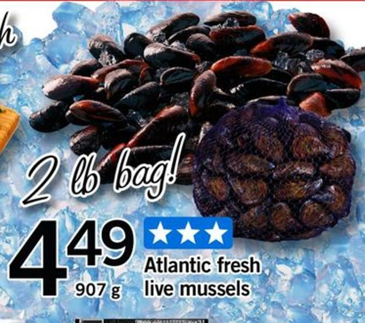 Atlantic Fresh Live Mussels