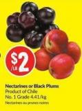 Nectarines or Black Plums