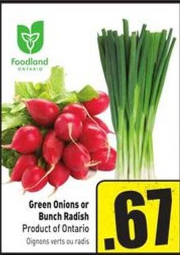Green Onions or Bunch Radish Product of Ontario