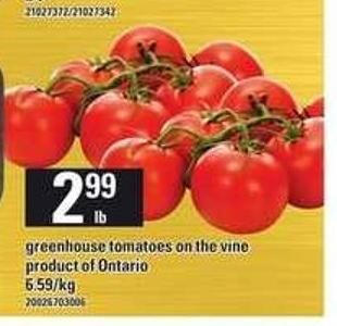 Greenhouse Tomatoes On The Vine
