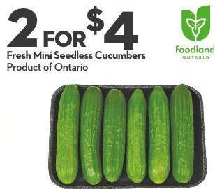 Fresh Mini Seedless Cucumbers