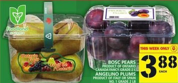 Bosc Pears Or Angelino Plums