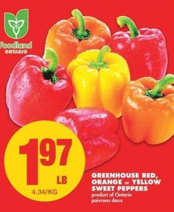 Greenhouse Red - Orange Or Yellow Sweet Peppers