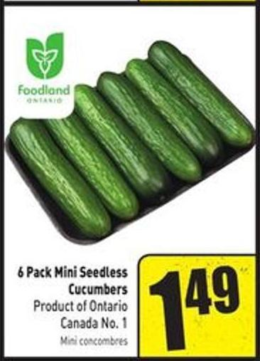 6 Pack Mini Seedless Cucumbers Product of Ontario Canada No. 1