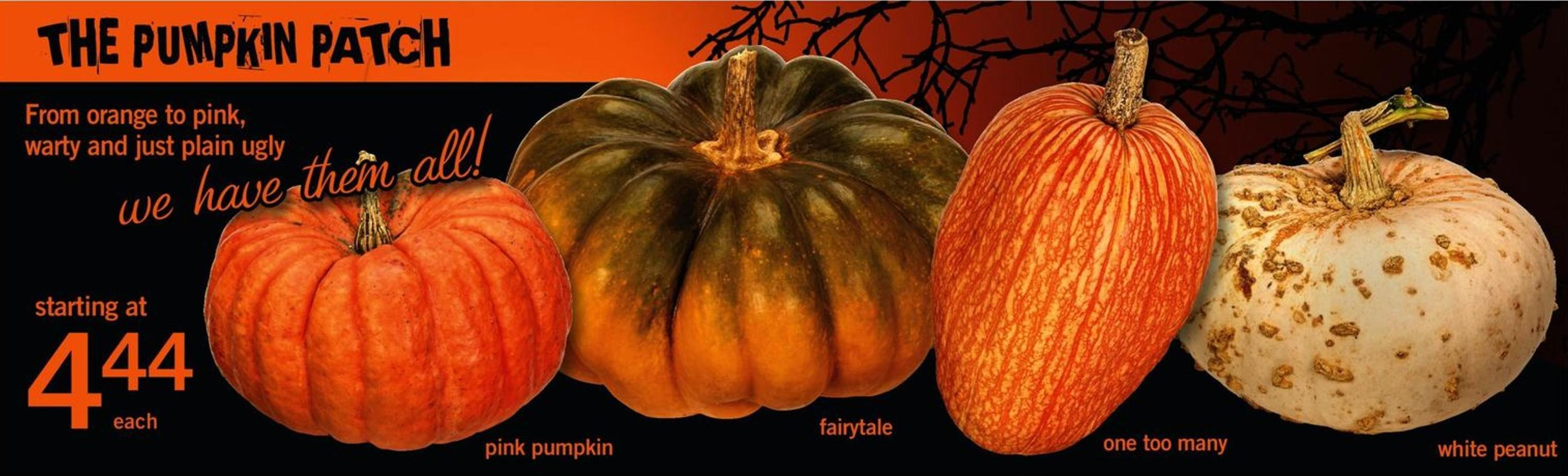 Pink Pumpkin - Fairytale - One Too Many - White Peanut