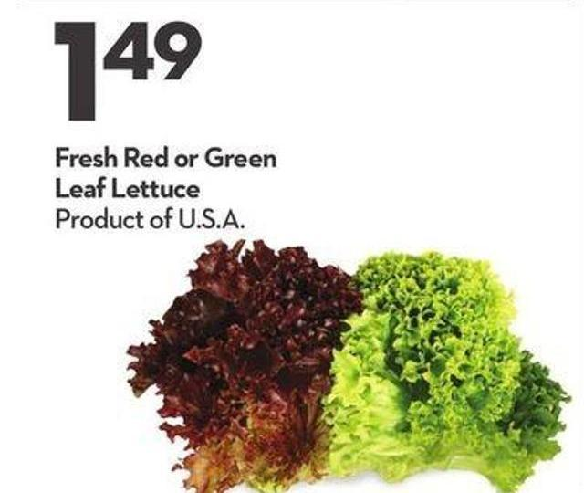 Fresh Red or Green Leaf Lettuce