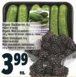 Organic Blackberries 170 G Product Of Mexico Organic Mini Cucumbers 340 G - Product Of Ontario - Canada No. 1 Grade