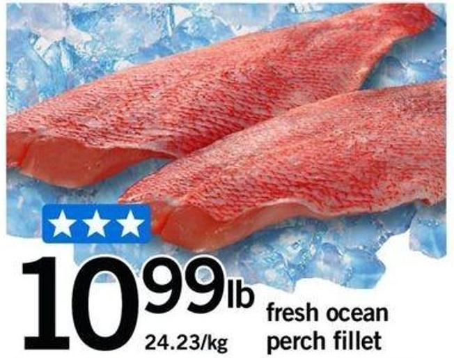 Fresh Ocean Perch Fillet