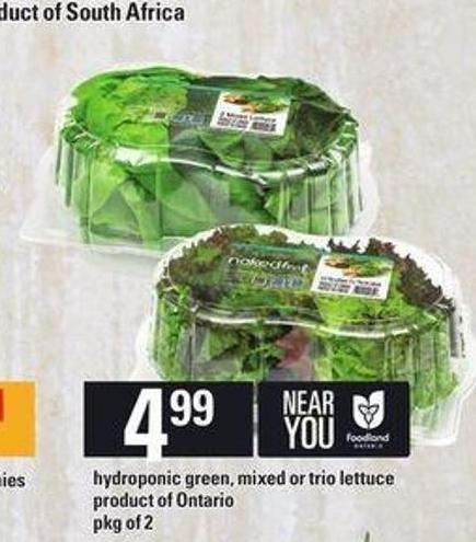 Hydroponic Green - Mixed Or Trio Lettuce - Pkg of 2