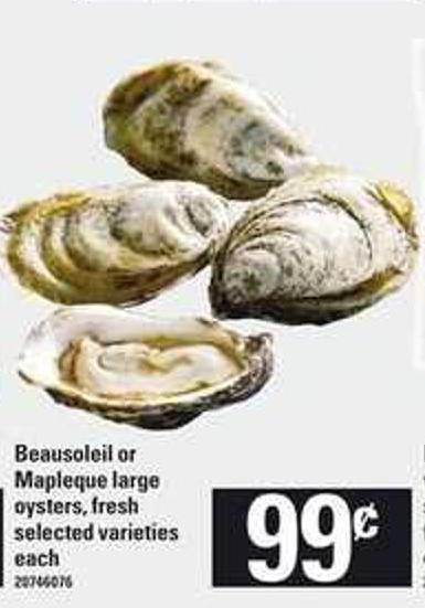 Beausoleil Or Mapleque Large Oysters