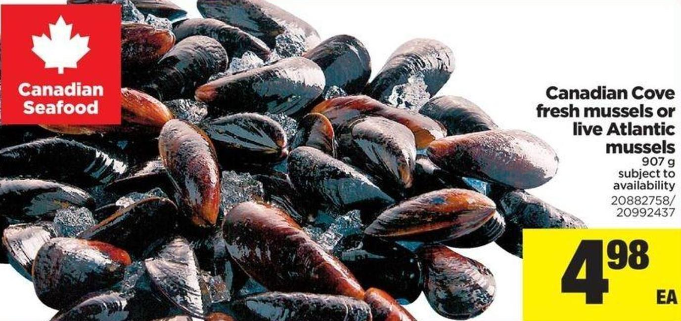 Canadian Cove Fresh Mussels Or Live Atlantic Mussels - 907 g