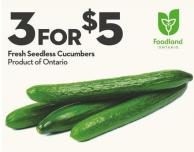 Fresh Seedless Cucumbers