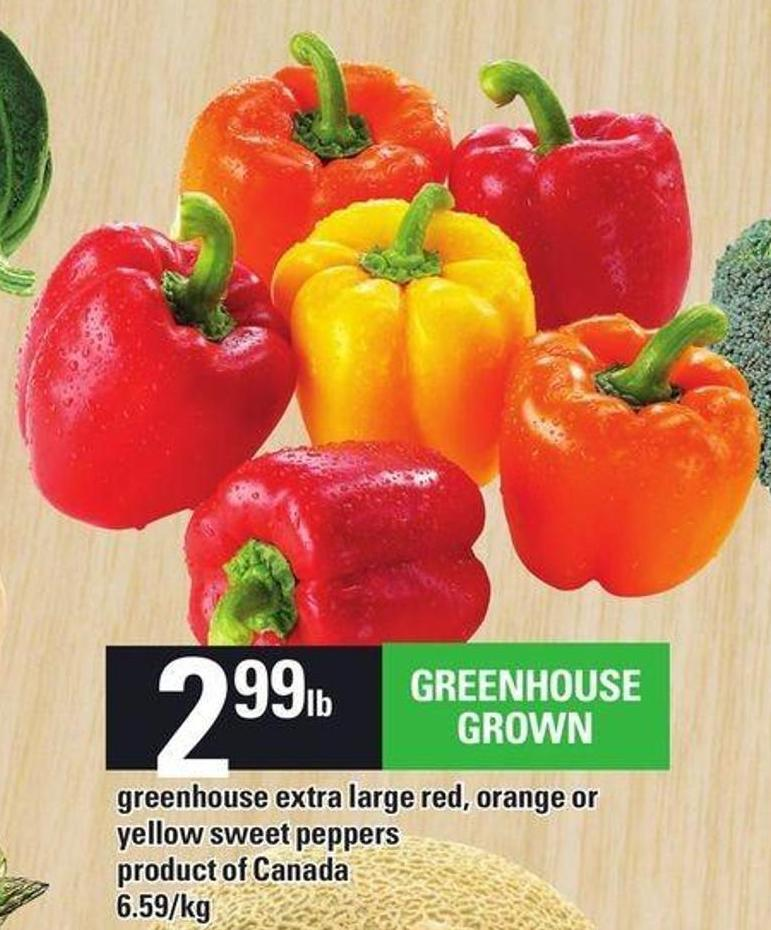 Greenhouse Extra Large Red - Orange Or Yellow Sweet Peppers