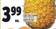 Golden Ripe Pineapple