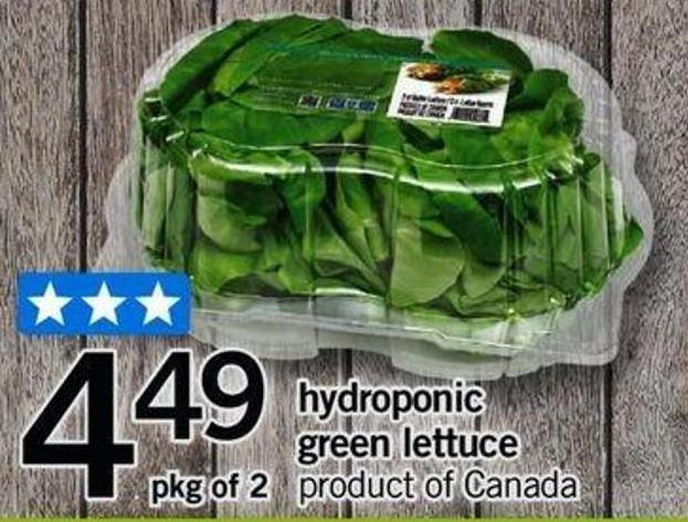 Hydroponic Green Lettuce - Pkg of 2