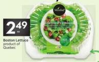 Mirabel Boston Lettuce