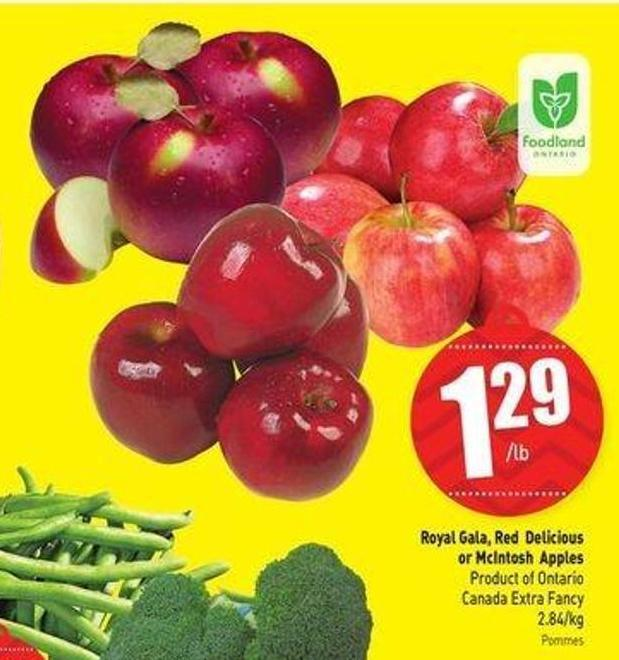 Royal Gala - Red Delicious or Mcintosh Apples 2.84/kg
