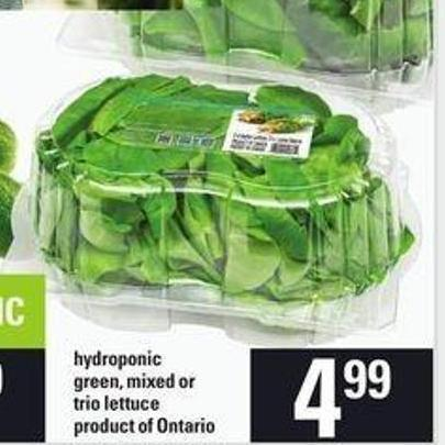 Hydroponic Green - Mixed Or Trio Lettuce