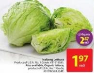 Close Iceberg Lettuce