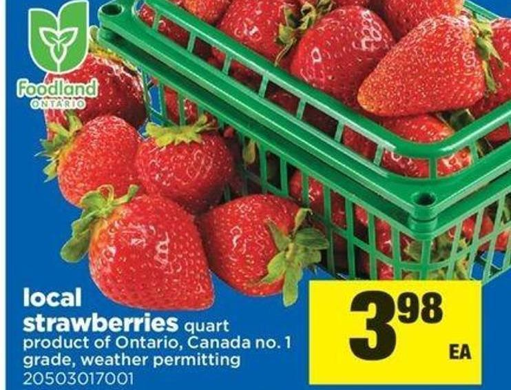 Local Strawberries - Quart