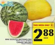 Mini Seedless Watermelons Or Canary Melons