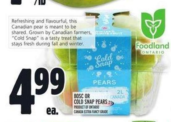 Bosc Or Cold Snap Pears