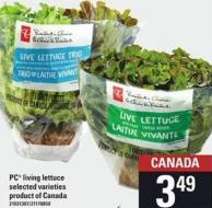 PC Living Lettuce