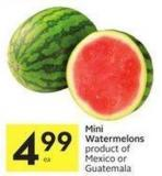 Mini Watermelons Product of Mexico or Guatemala