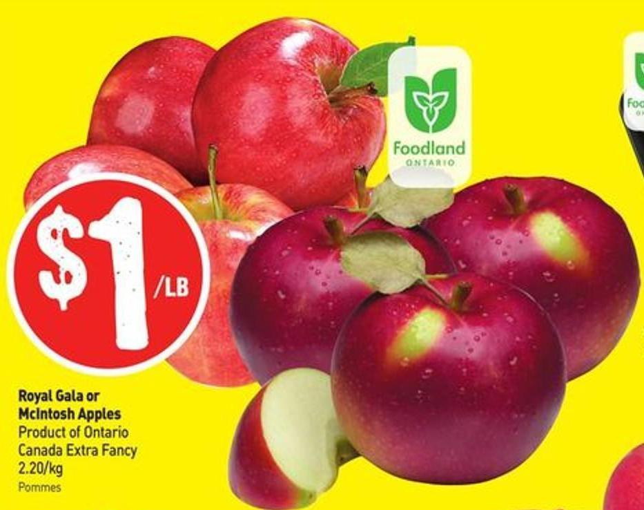 Royal Gala or Mcintosh Apples Product of Ontario Canada Extra Fancy 2.20/kg