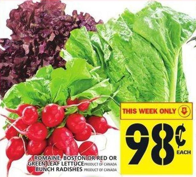 Romaine - Boston Or Red Or Green Leaf Lettuce Or Bunch Radishes