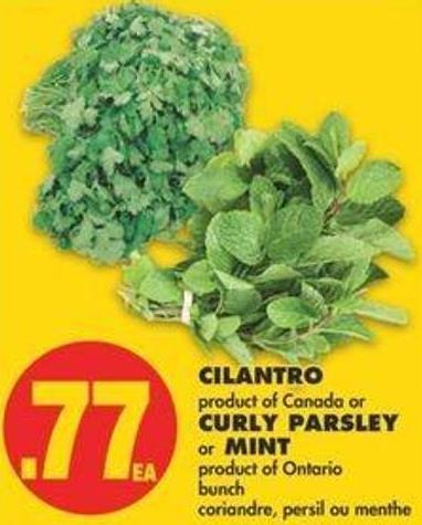 Cilantro Or Curly Parsley Or Mint