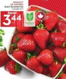 Quart Strawberries Canada No 1 Product Of Ontario