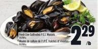Fresh Live Cultivated P.e.i. Mussels