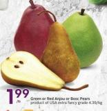 Green or Red Anjou or Bosc Pears