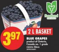 Blue Grapes - 2 L Basket