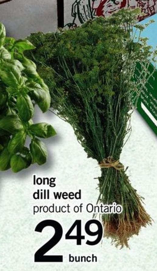 Long Dill Weed - Bunch