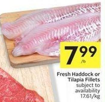 Fresh Haddock or Tilapia Fillets