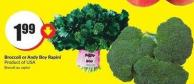 Broccoli or Andy Boy Rapini