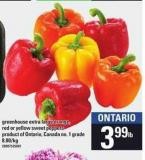 Greenhouse Extra Large Orange - Red Or Yellow Sweet Peppers